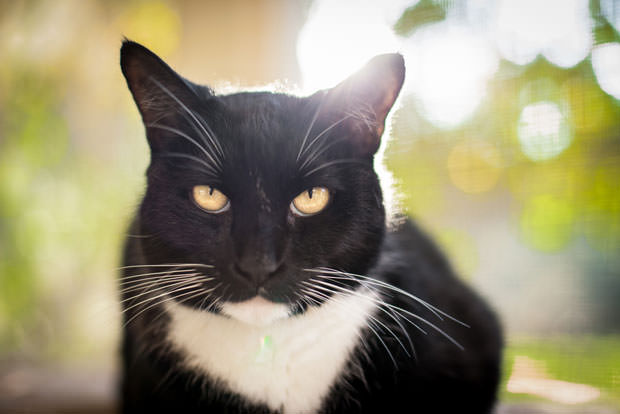 21 Most Famous Cats In History | Cat Eyes | Page 18